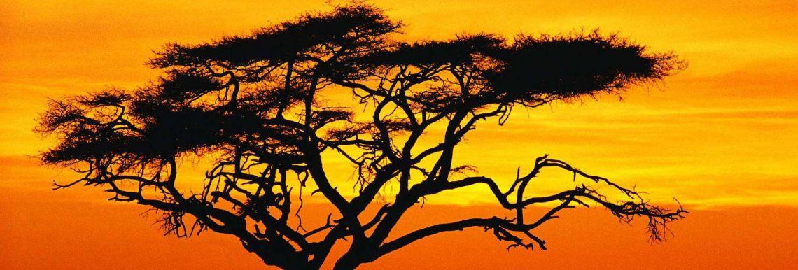 Mali érdekességei - Varázslatos Bambara Hotel**** Felsőtárkány